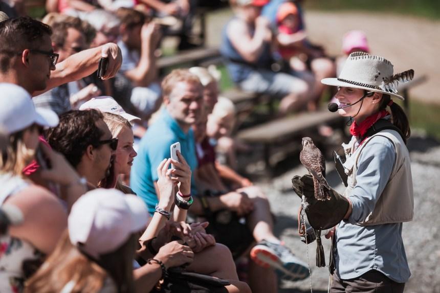 À la découverte des oiseaux de proie montréalais dans RDP-PAT