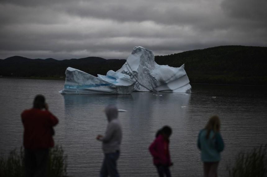 À Terre-Neuve, les touristes se bousculent dans le «couloir des icebergs»