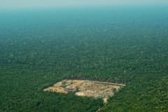 Brésil: la déforestation multipliée par quatre en un an