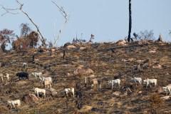 Une tempête anti-Bolsonaro après ses propos sur les feux en Amazonie