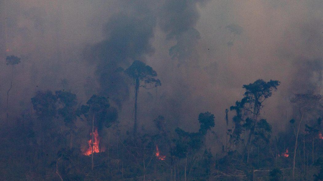 canne à sucre Amazonie pape