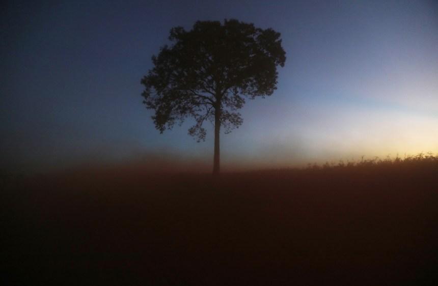 Amazonie: la déforestation serait la cause principale des incendies