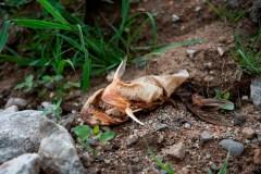Poissons morts en Outaouais: la thèse du barrage est mise en doute