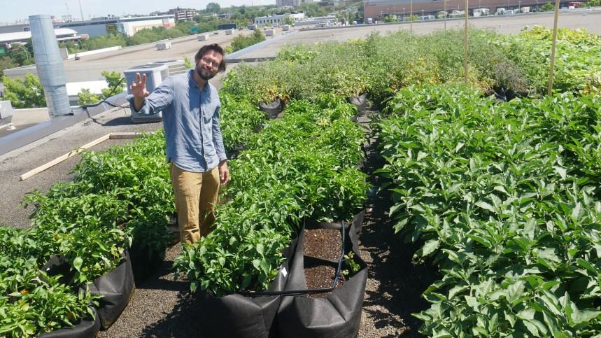 Agriculture urbaine : cultiver ses légumes un toit à la fois