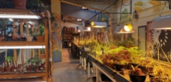 atelier horticulture Pinel