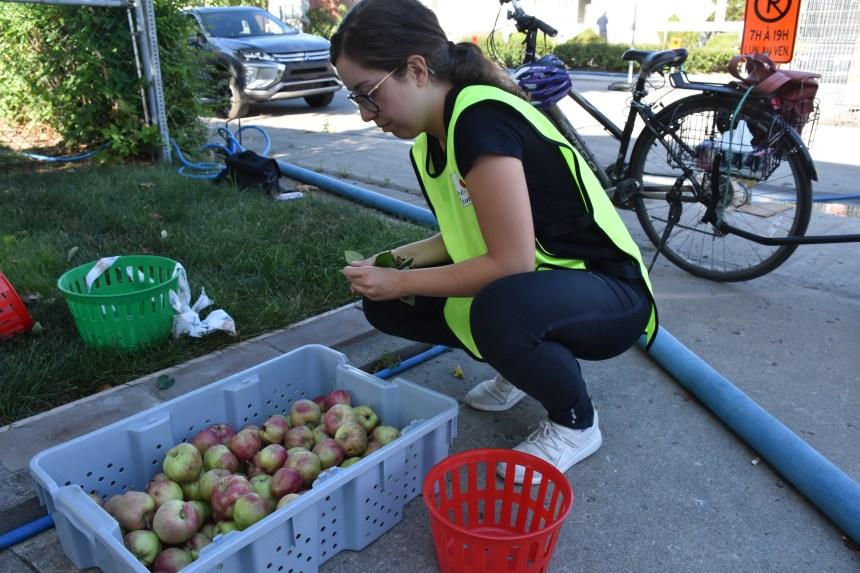 Des récoltes fruitières en milieu urbain