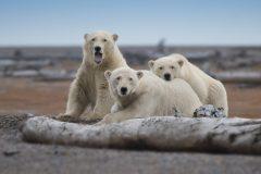 Ours polaires: Canada Goose dévoile un Bearbrick pour leur venir en aide