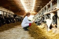 Agriculture: le Canada doit suivre les recommandations du GIEC, selon des expertes