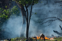 Forêt menacée par les feux en Afrique: Greenpeace s'alarme