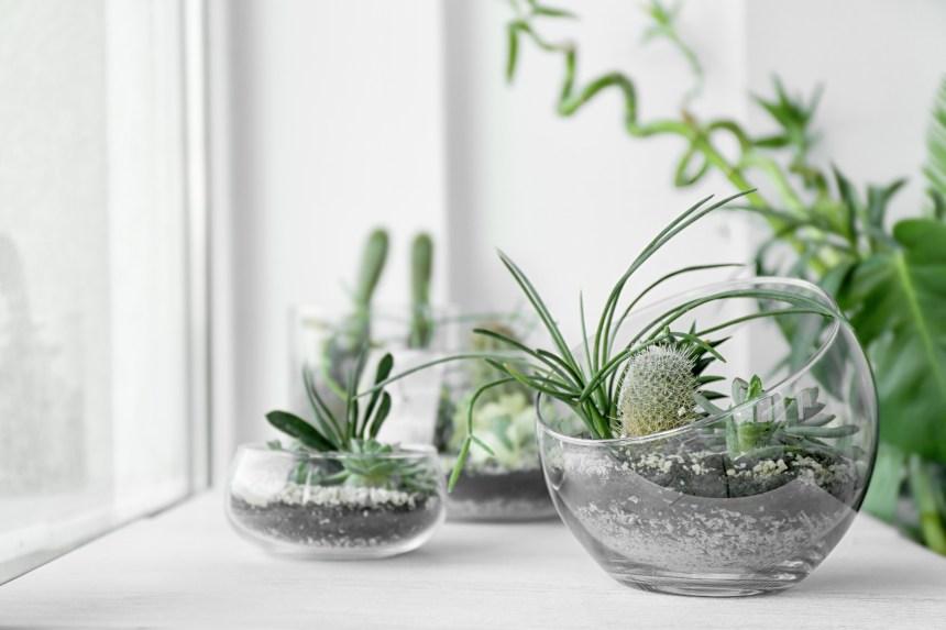 Des plantes dans un petit espace