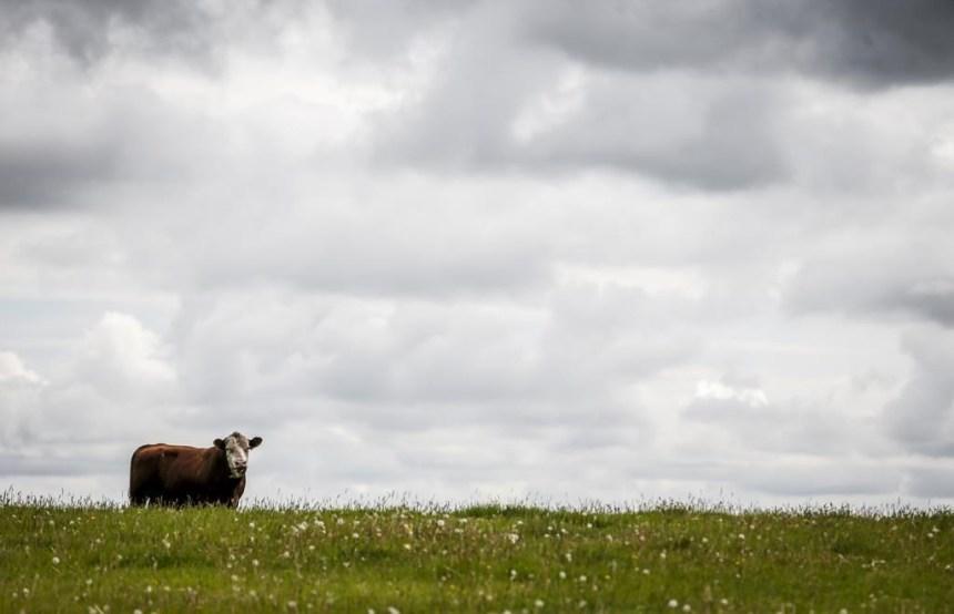 Friends of Science salue Élections Canada pour sa mise en garde aux écologistes