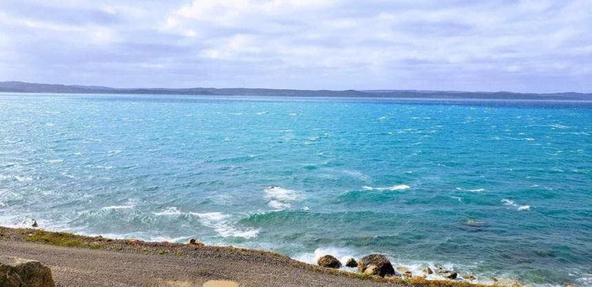 Prolifération de phytoplancton dans les eaux de la côte Est de Terre-Neuve