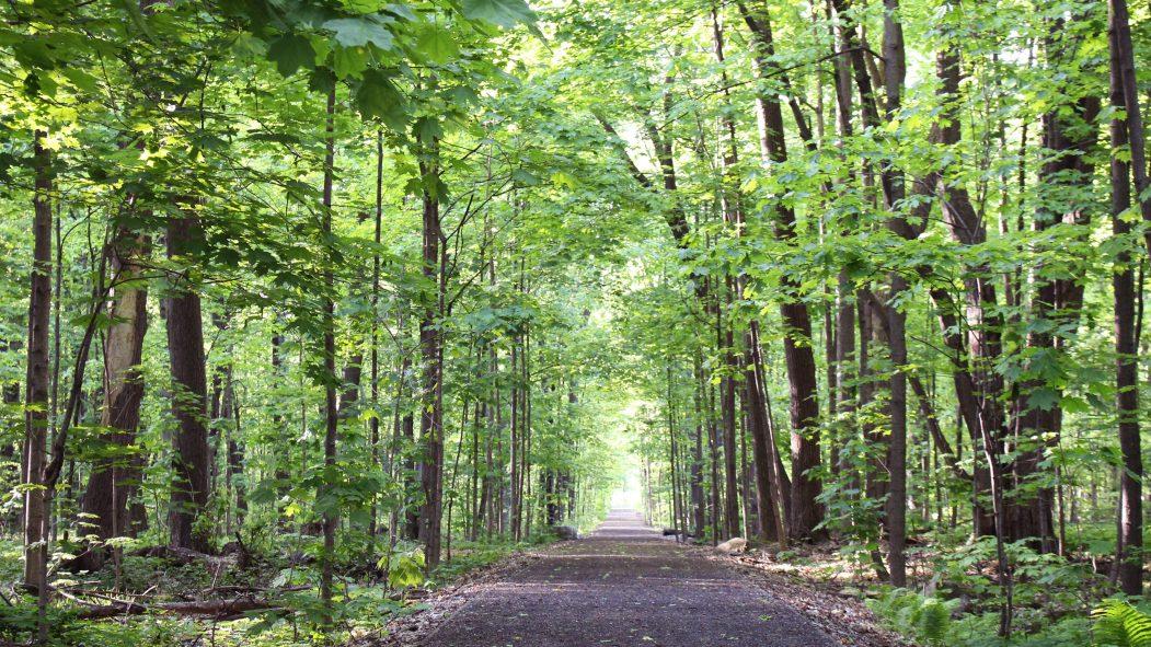 sentiers verts sentier parc-nature