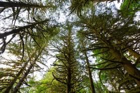 Parc provincial Golden Ears, Maple Ridge, Grand Vancouver, Colombie-Britannique, Canada.
