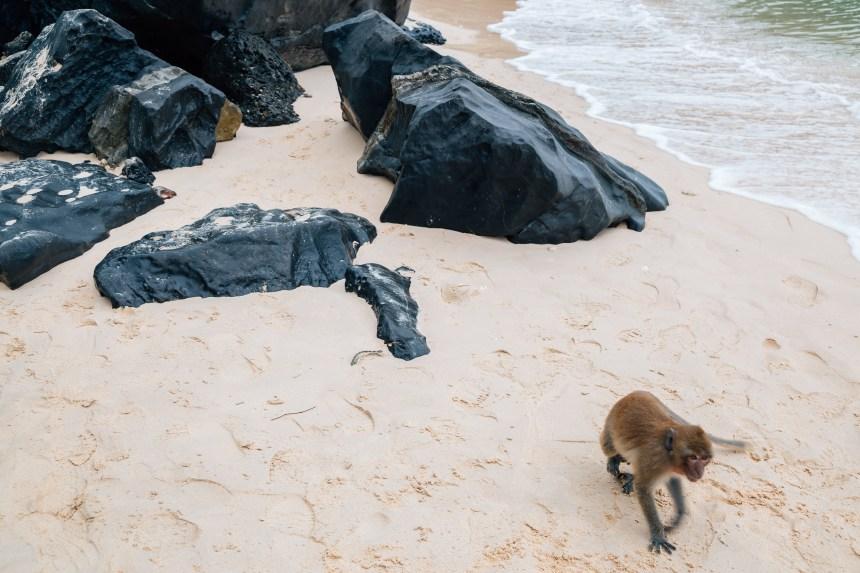 Vietnam: tourisme sordide sur l'île aux singes pour les défenseurs des animaux