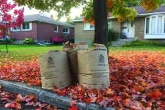 Collecte de feuilles à Dorval