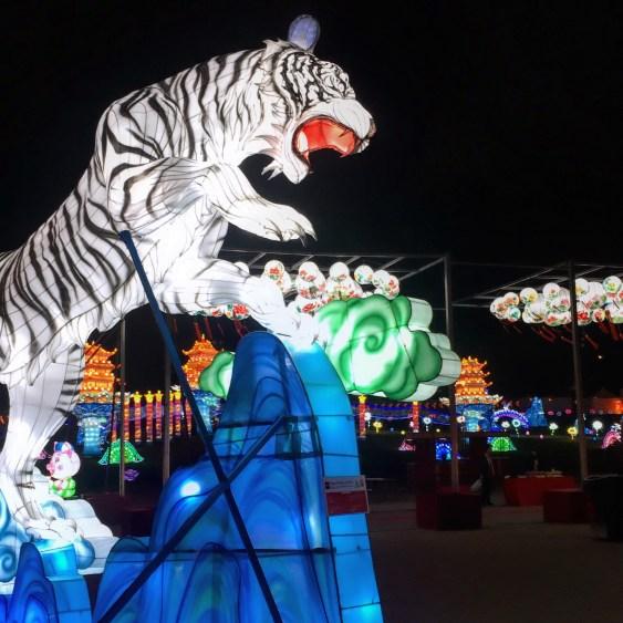 Tigre lumineux