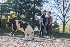 Nouveau parc à chien