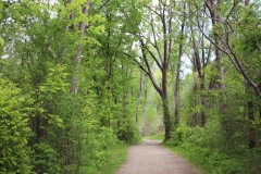 Parc-nature de la Pointe-aux-Prairies : 3,2M$ pour abattre 14 000 frênes
