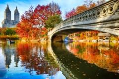 Saveurs d'automne à New York