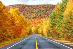 Une carte interactive pour suivre l'avancée des couleurs d'automne au Québec