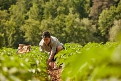 Les agriculteurs veulent de l'aide pour s'adapter aux changements climatiques