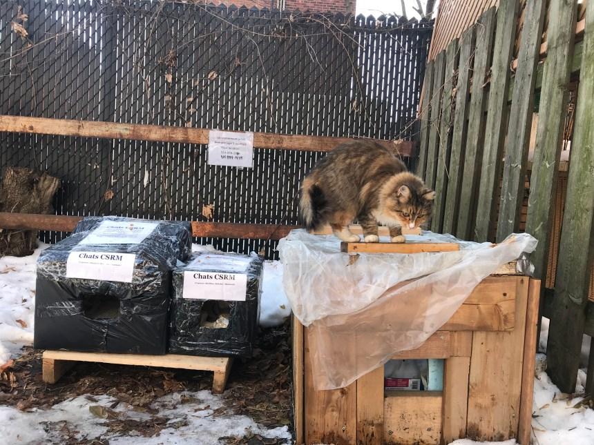Aider les chats de ruelle à passer l'hiver