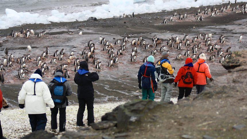 Plantes et insectes apportés par l'Homme, une menace pour l'Antarctique