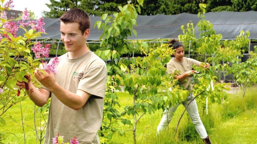 Profession horticulteur: les artistes de la nature