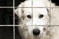 Aider les refuges animaliers de la province