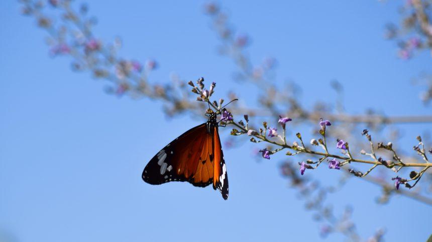 Les changements climatiques menacent d'extinction 30 000 espèces