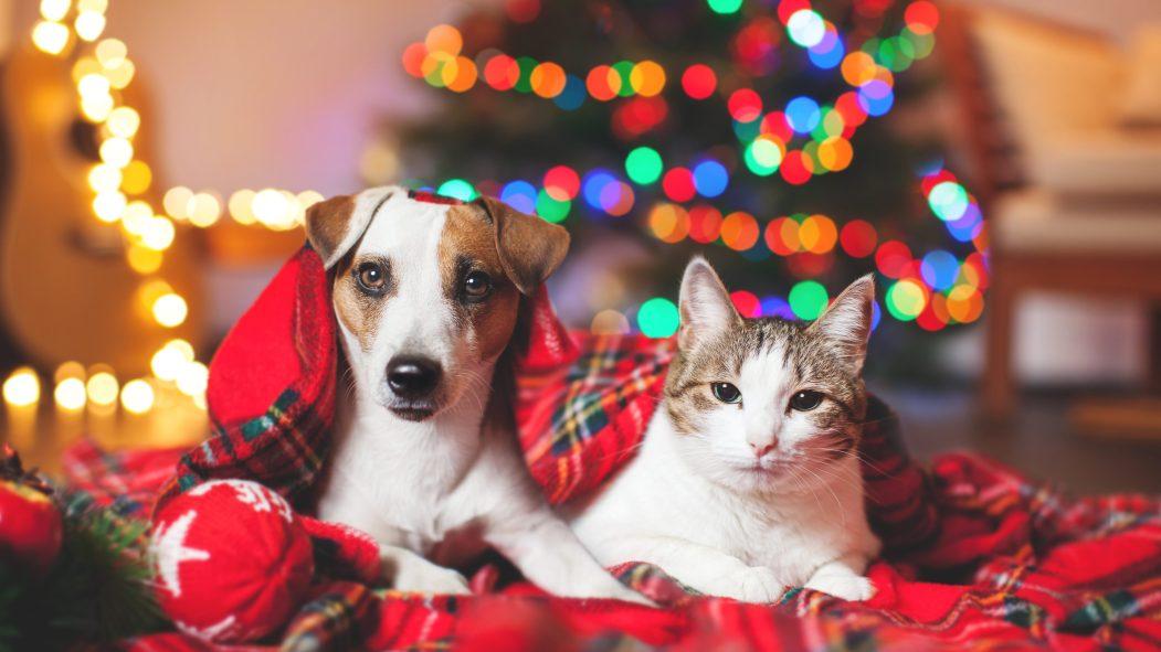 animaux Noël