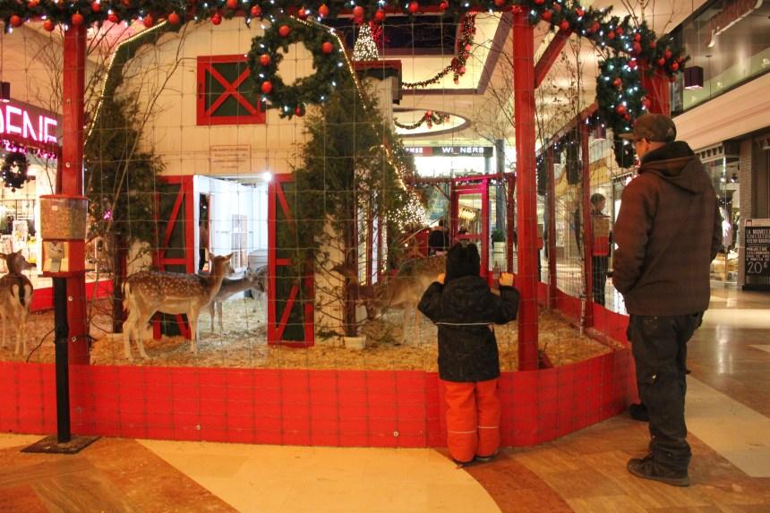 La Place Versailles expose toujours des daims pour Noël