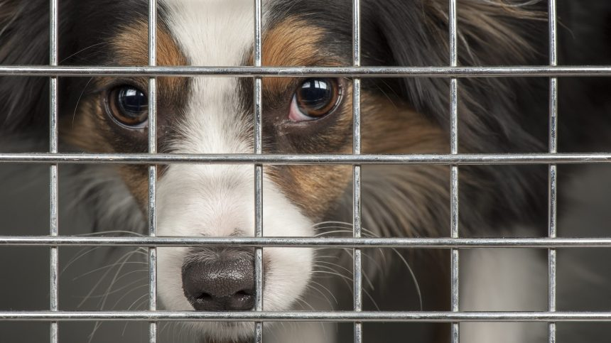 Montréal: le grand centre animalier municipal ne verra pas le jour