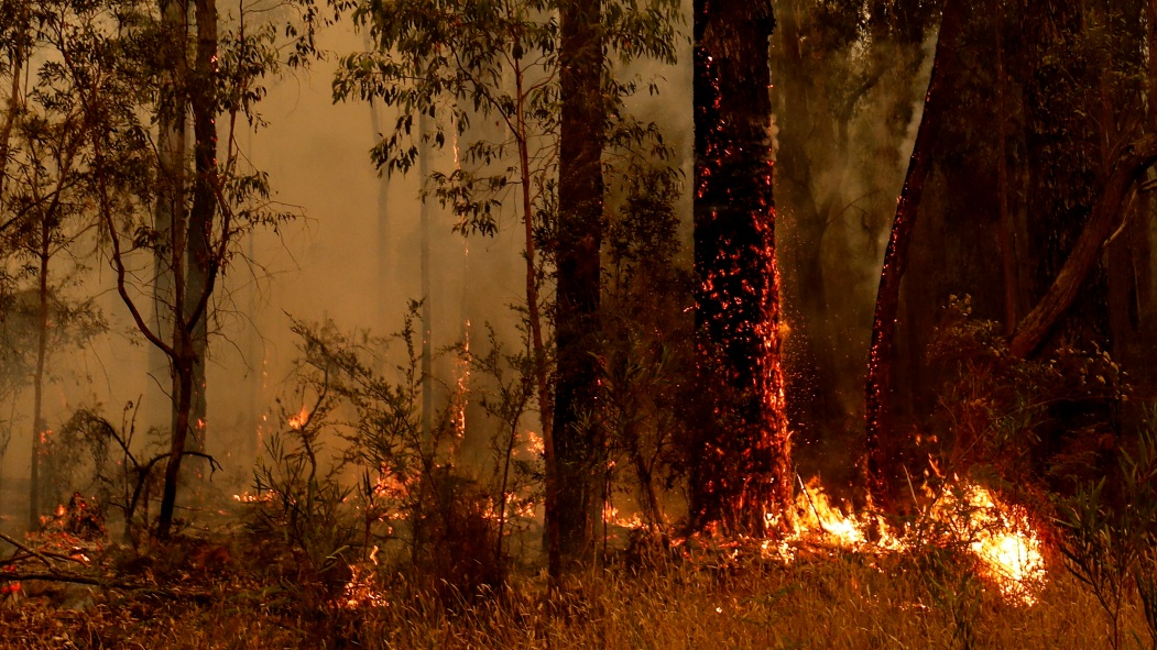 Forte mobilisation en Australie alors que les incendies ont fait une 24e victime