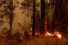 Mobilisation pour l'Australie alors que les incendies ont fait une 24e victime