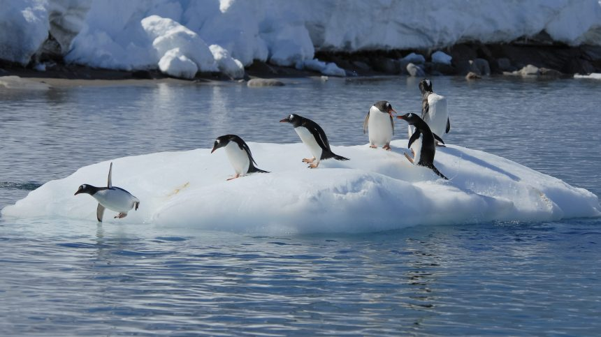 En Antarctique, les records de chaleur se multiplient