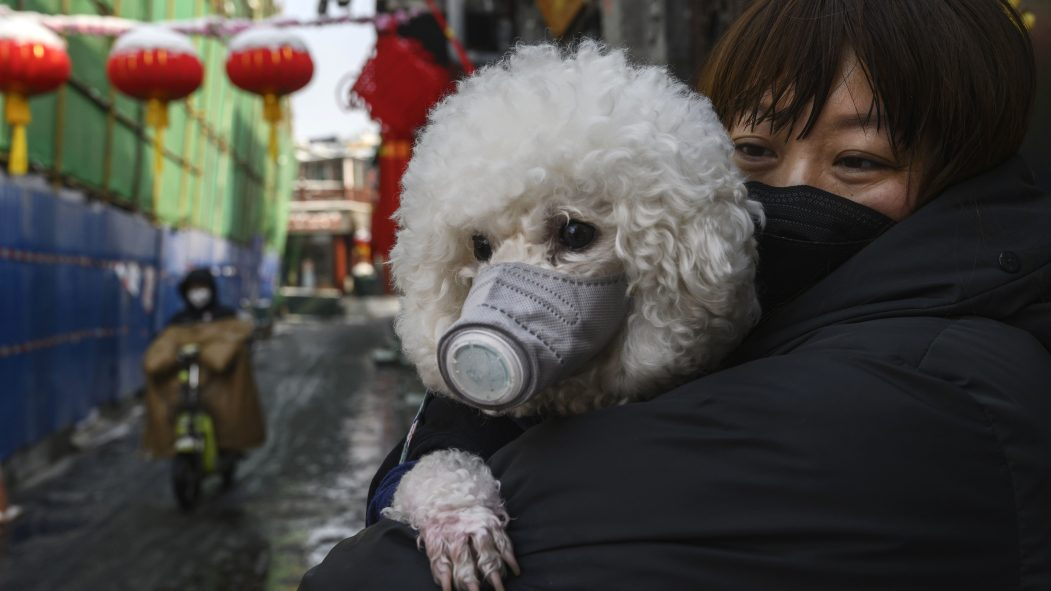 hong Kong chien coronavirus