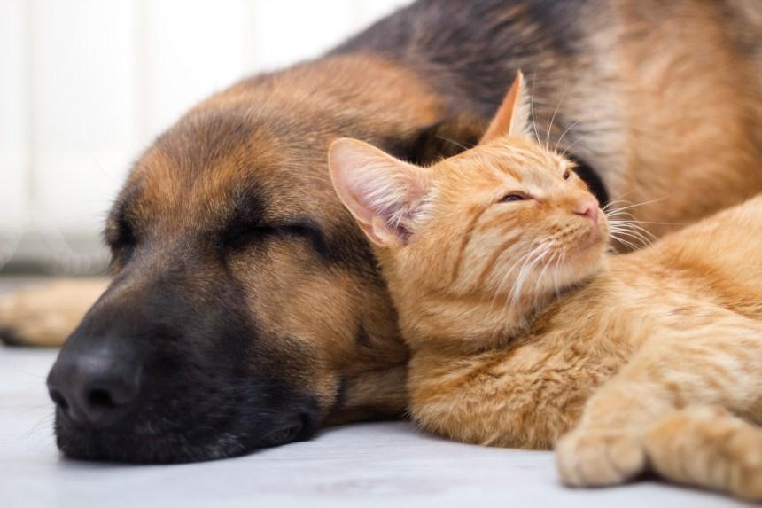 Malgré la pandémie, «des milliers de demandes» à la SPCA