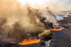 L'Ukraine assure que la situation des feux de forêt à Tchernobyl s'améliore