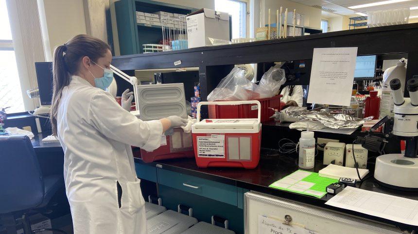 Maisonneuve-Rosemont: branle-bas de combat pour accélérer l'analyse des tests