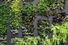 Écologie : un mur végétal verra le jour sur Masson en 2021