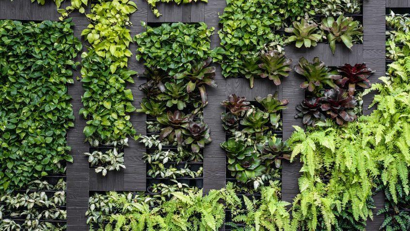 Un mur végétal sera installé sur la rue Masson en 2021
