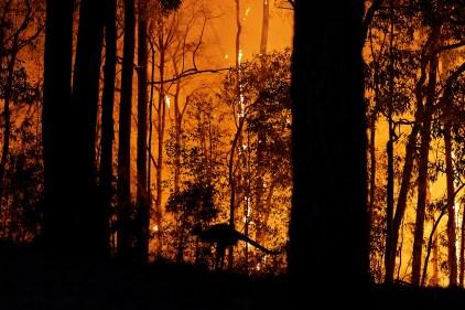 Le monde lutte contre les feux de forêt en pleine pandémie