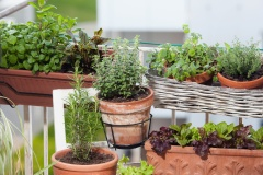 Plants d'herbes en jardinière