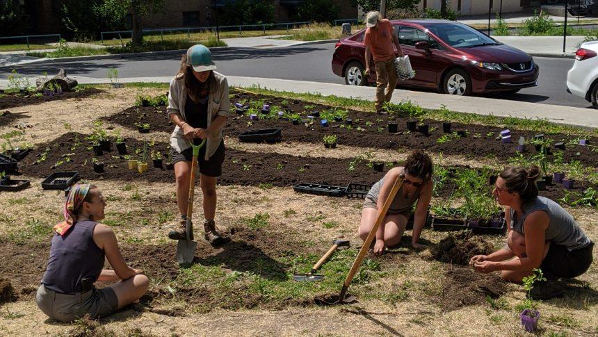 Une oasis pour les pollinisateurs au parc du Père-Marquette