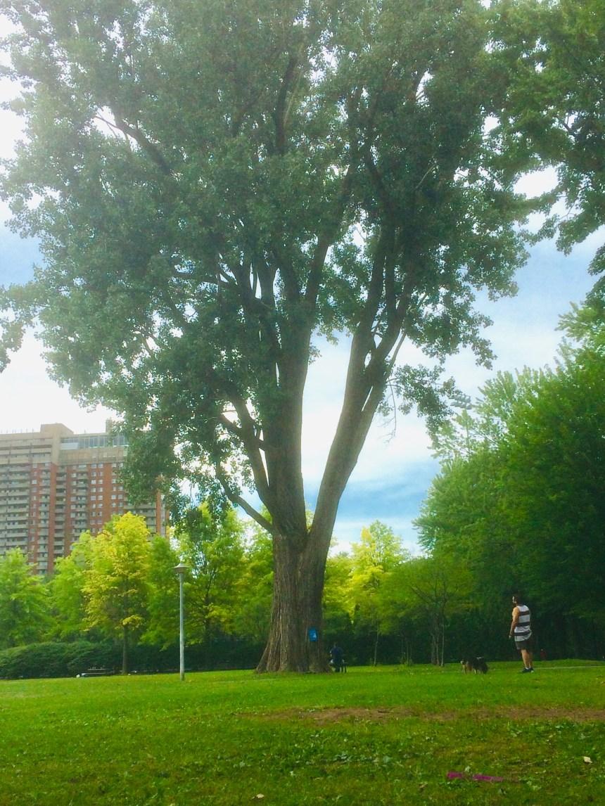 La valeur économique des arbres