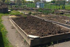 Solidarité dans les jardins communautaires de Saint-Laurent