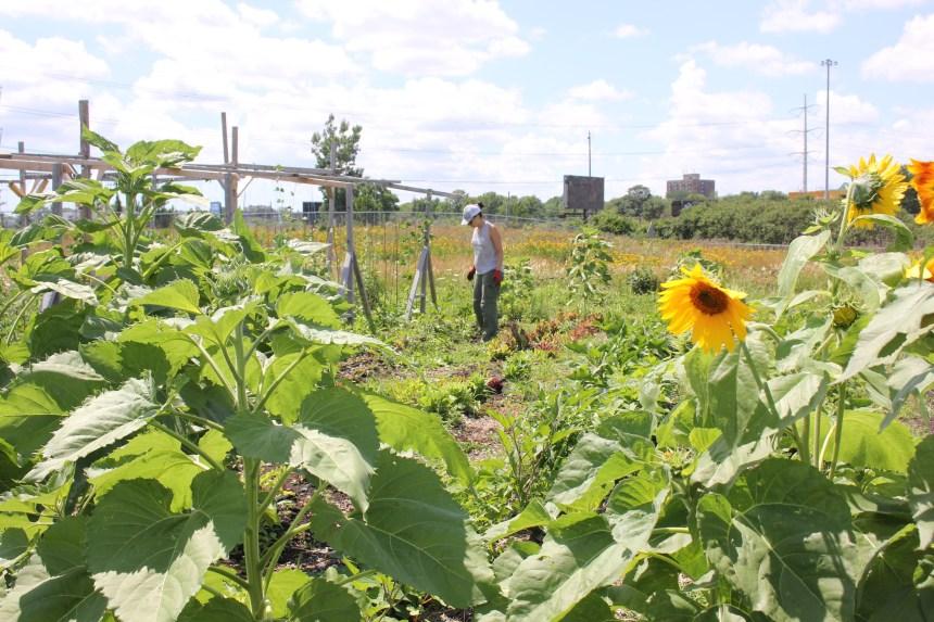 La Récolterie Hochelaga-Maisonneuve: des volontaires au service de la communauté