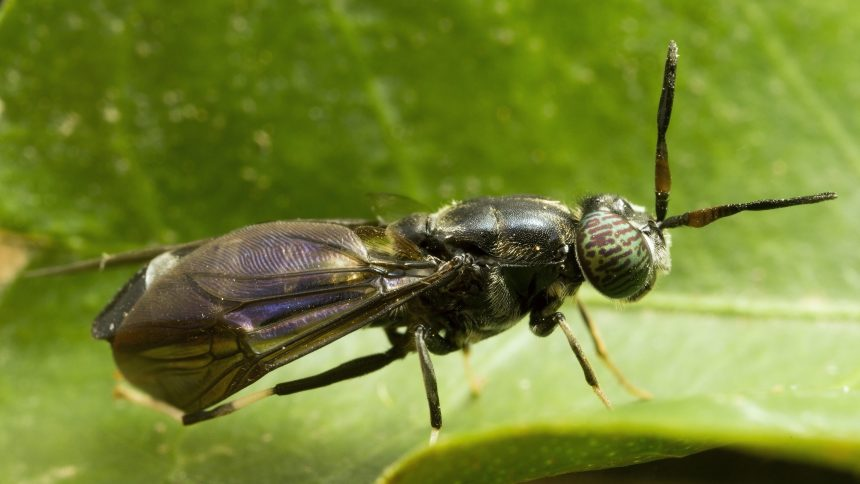 Des insectes contre les changements climatiques